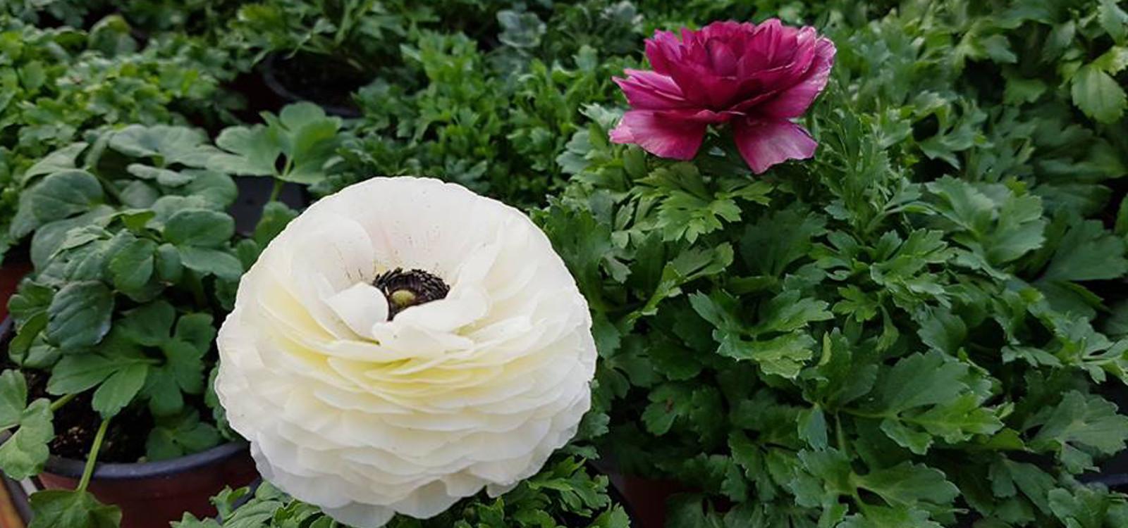 Flori pentru primavara