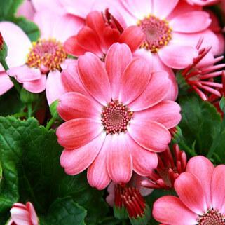 Flori pentru 1 - 8 Martie