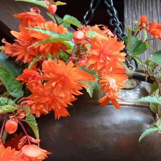Flori pentru primavara si vara