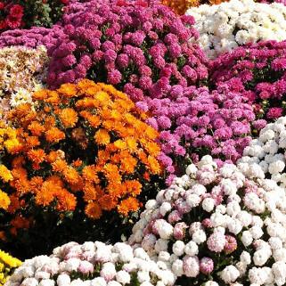 Flori pentru toamna si iarna